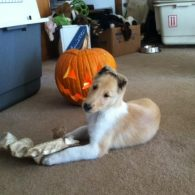 Ginny at 8 weeks